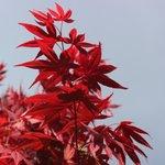 Stunning leaves