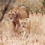 Wildlife galore