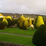 A selection of the 99 yew trees!