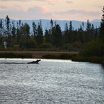 A moose swimming across the lake (taken from the deck of the Elk House)