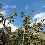 Apple trees of Apple Orchard Farm & camping
