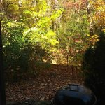 View from the back porch, dense forest all around