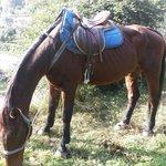 Uno dei cavalli della scuderia