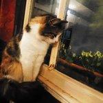 Resident kitty cat!