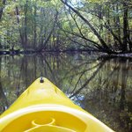 Kayaking down the creek. About 1/2 of this trip was the creek and half the river.