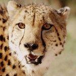 Hoedspruit Endangered Species Centre