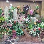 2014 Bromeliad Show Display