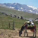 El Arriero Sierra Nevada
