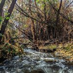 A hidden creek at the American River