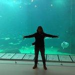 Das große Aquarium