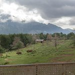 Bizons in het park van Lacuniacha