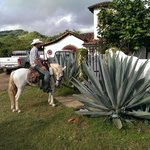 get me the largest yucca plant you can