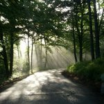 La strada nel bosco