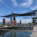 floating fishfarm visiting