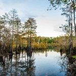 Dead Lakes Recreational Area