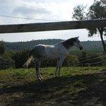 cavallo paziente