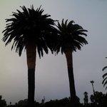 the ocean palms ?