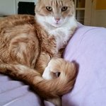 The Ginger Cat Bed & Breakfast Foto