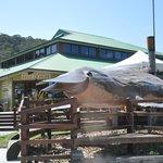 Australian Axeman's Hall of Fame