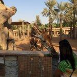 Feeding adorable giraffes