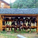 Elephant Head Lodge Foto