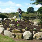New rockery in the making