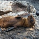 Photo de Galapagos Natural Life - Day Tours