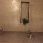 Shower niche; real plant