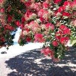 Hahei Beach - shade