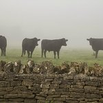 Cows in the Mist (title suggested by Hanna!) - from the breakfast room window.