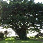 Fantastische boom op terrein
