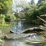 The Otorohanga Native Bird Park