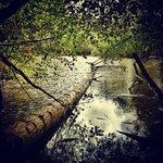 Jewel Lake, Tilden Park