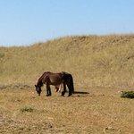 Wild Horses of Shackelford Banks