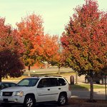 The leaves have started turning colors now.