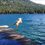 Dogs love Donner Lake