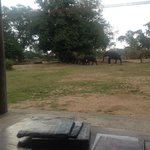 elephants during tea time
