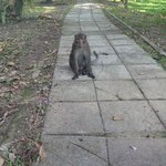 Monkey in the grounds