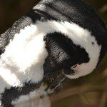 In der Pinguinkollonie