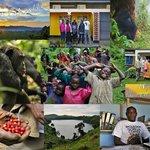 Mountain Gorilla Coffee Tours Day Tours