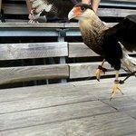 oiseau à portée de main