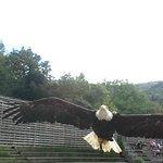 des oiseaux magestueux