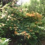 Rododendrons een van de vele.