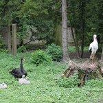Зоопарк Аугсбурга 1
