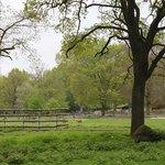 Зоопарк Аугсбурга 2