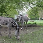 Зоопарк Аугсбурга 3