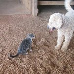 Friendly cat and dog