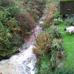 Stream nearby with a pink sheep (competition!)