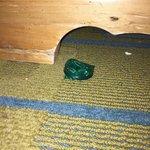 Found under nightstand