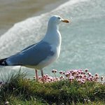 Much nicer to be woken by a seagull than an alarm clock!